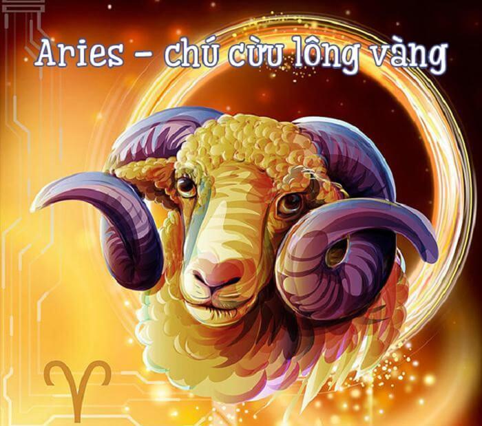 Chú cừu lông vàng