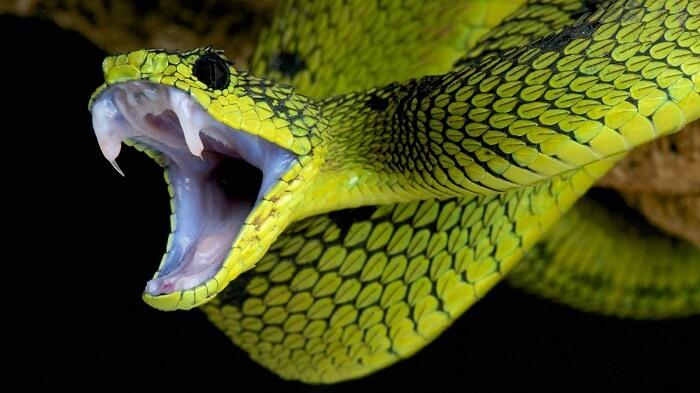 Mơ thấy rắn lục cắn thì có thể thời gian tới bạn gặp khó khăn trong tài chính
